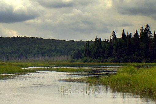 Jane Hope: Ruisseau Jackson, aire naturelle protégée