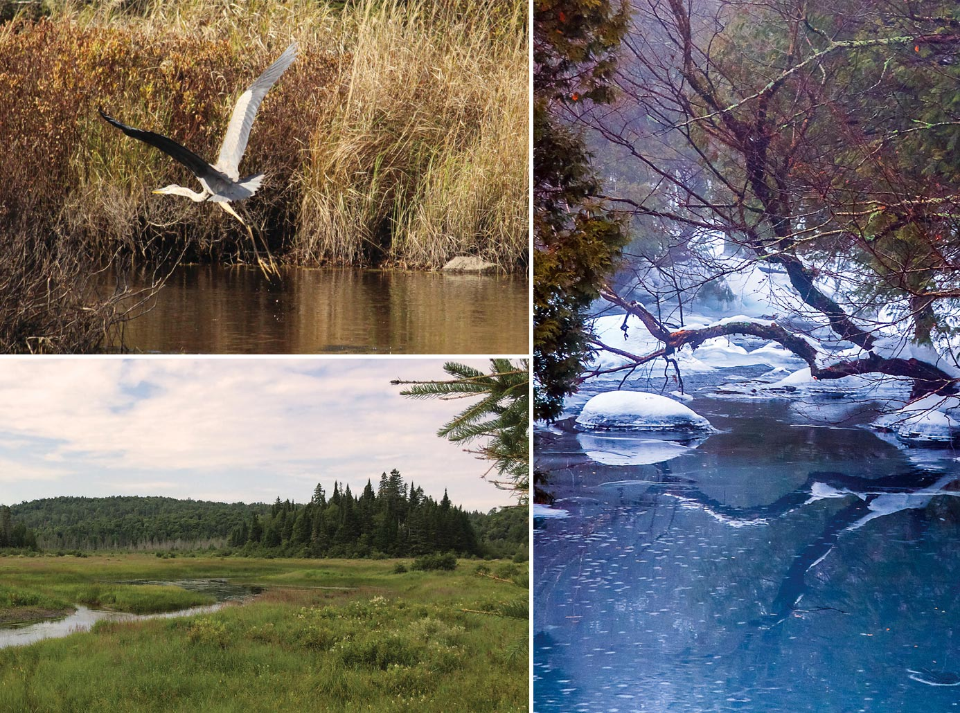 Ruisseau Jackson Nature Reserve brings 215 acres of new conservation to Morin Heights